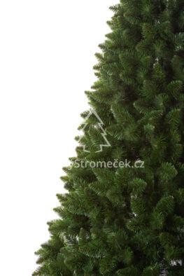 borovice-himalajska-detail